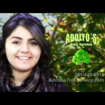 Adolfo's Tree Service #1 stump Grinding acre lot removals