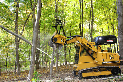 Underbrush Tree Removal Rayco best forestry in Houston Texas